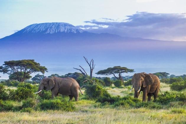 elefanti-africani_shutterstock_601859093