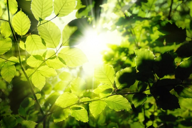 fotosintesi-energia
