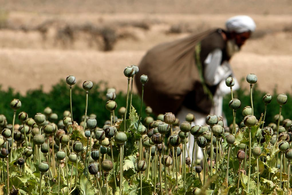Il 26 giugno è la Giornata mondiale contro l'abuso e il traffico illecito di droga