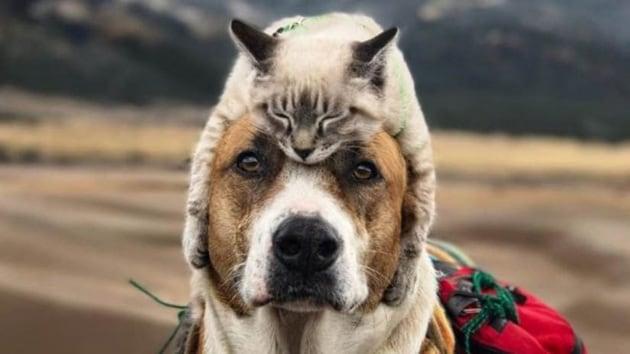 Cani e gatti hanno il senso del tempo?