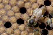 ape-regina-apertura