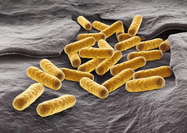 Antibiotico-resistenza: i batteri cambiano forma per sfuggire alle cure