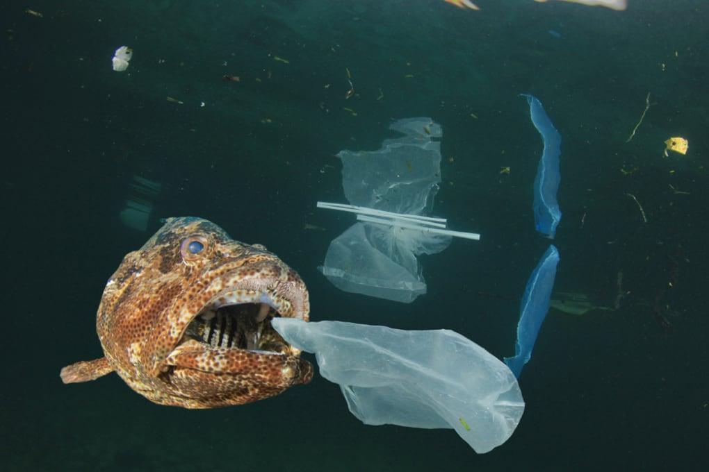 Mari e oceani: dove si accumula lo strato di plastica