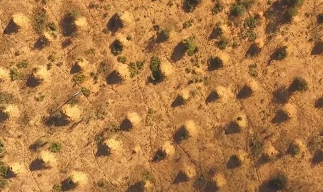 La millenaria città delle termiti in Brasile: è visibile anche dallo Spazio