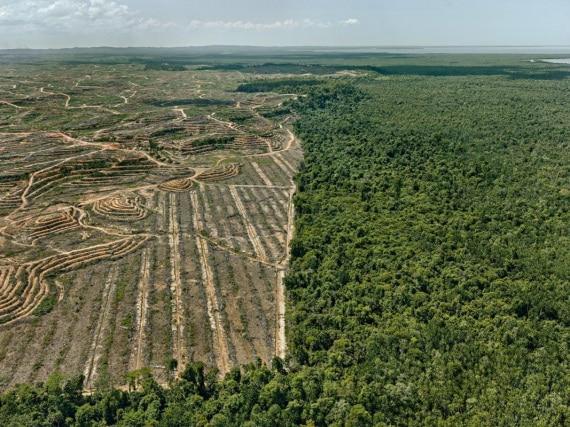 antropocene - Borneo: olio di palma e deforestazione