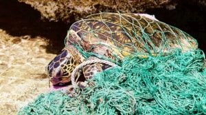 Ocean Film Festival Italia, tartarughe, inquinamento da plastica
