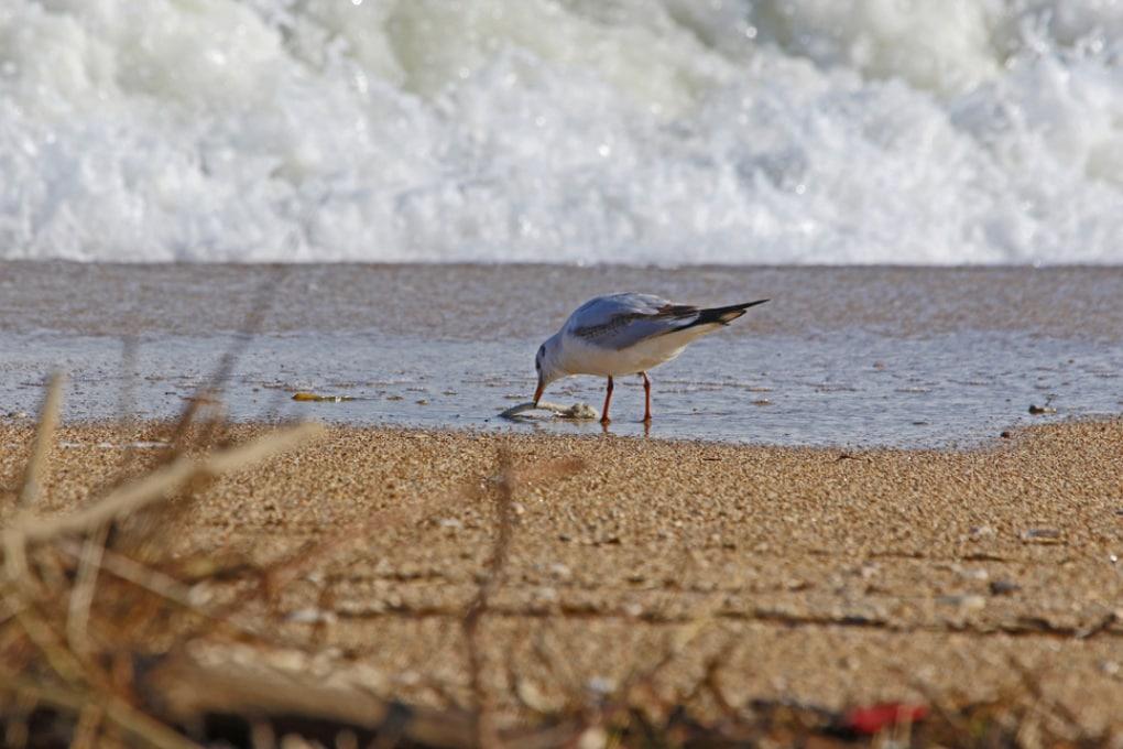Plastica: ecco chi inquina il Mediterraneo