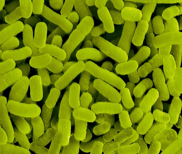 Come il microbiota e i probiotici ci influenzano (in bene)