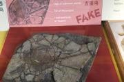 archaeoraptor_archeologia-fake