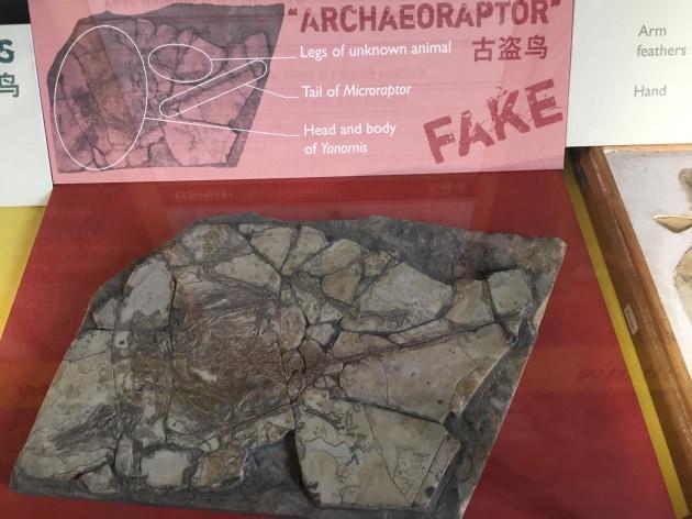 Bufale scientifiche: il dinosauro-truffa