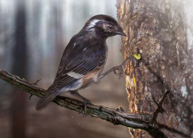 Tesori nell'ambra: la zampa di un uccello preistorico con un dito sproporzionato