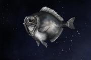 pesce-abissale-vista
