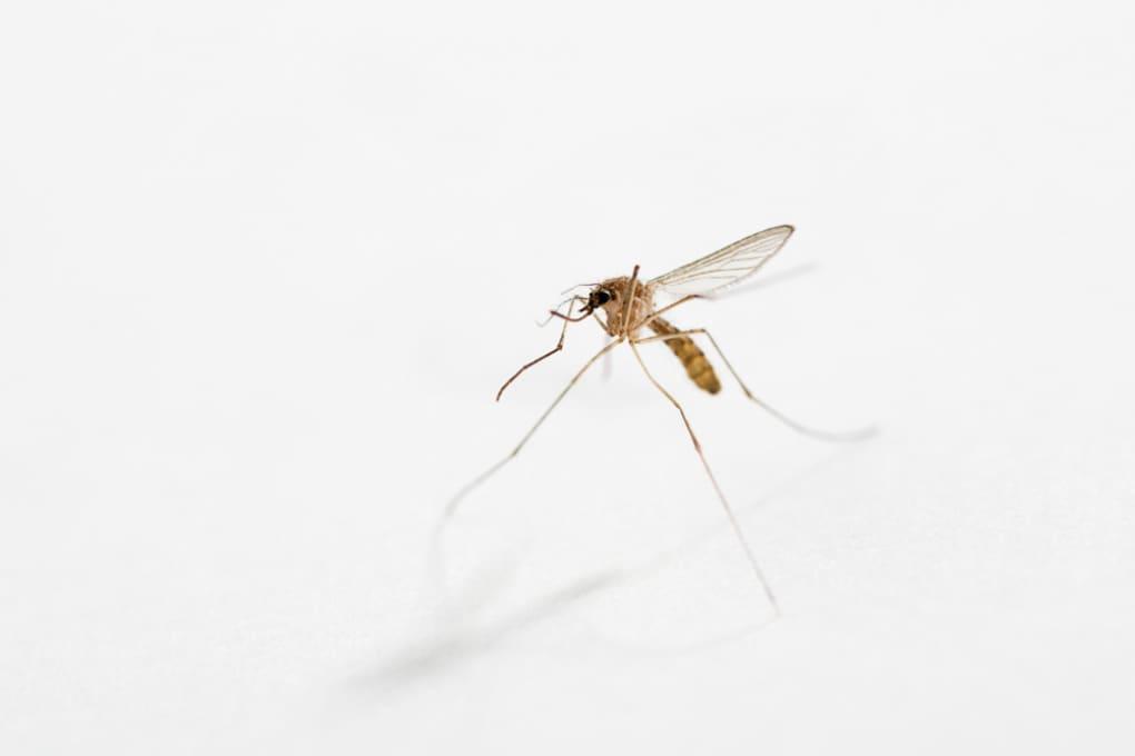 Repellenti per zanzare: come funzionano?