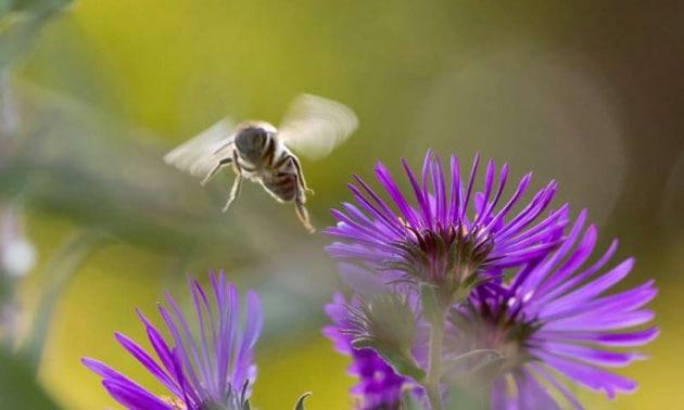 api-glifosato