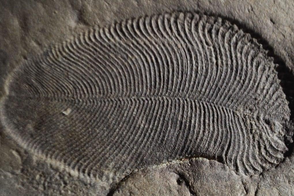 Molecole di grasso fossile rivelano il più antico animale terrestre