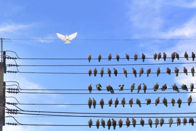 piccioni-folla