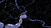 cellule-nervose