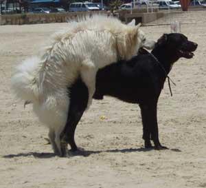 Ho una femmina dominante che monta gli altri cani cosa - Quando fare il primo bagno al cane ...