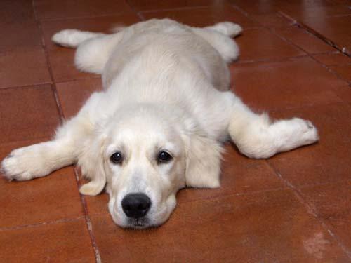 Il cucciolo e le vaccinazioni for Cucciolo di talpa