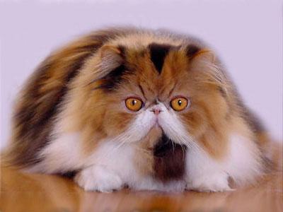 I Gatti Soffrono Il Caldo Focusit